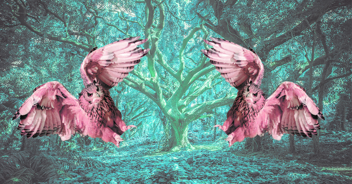птицы москвы