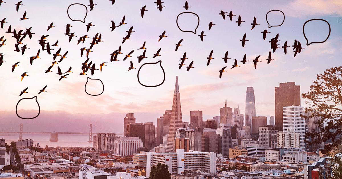 Птицы наконец услышали друг друга в пандемию